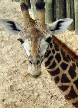 Photo: Brevard Zoo