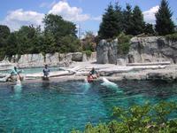 Aquarium at Mystic
