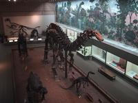 Bones at Peabody Museum New Haven