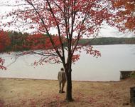 Thoreau at Walden Pond?