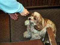 Honey the Money Dog getting her treat