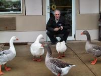 Stan Interacting with the ducks, Super 8 Motel