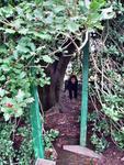Sandra hiding in a tree \
