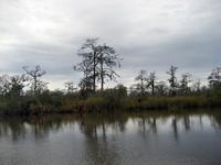 On the Darien River