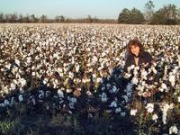 Sandra picking cotton