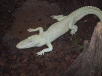 At the Alligator Farm, St Augustine