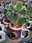 Cups of cactus at Stew Leonard\'s